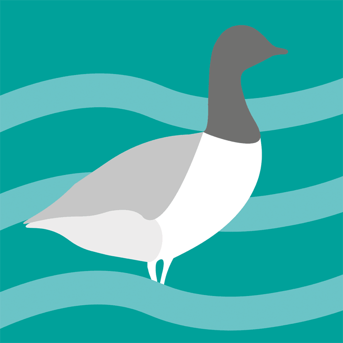 solent birds icon