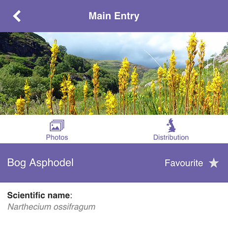 MoorPLANTS app species info page