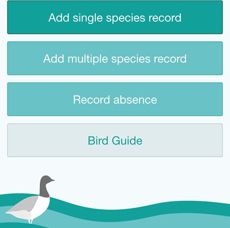 solent birds app home page
