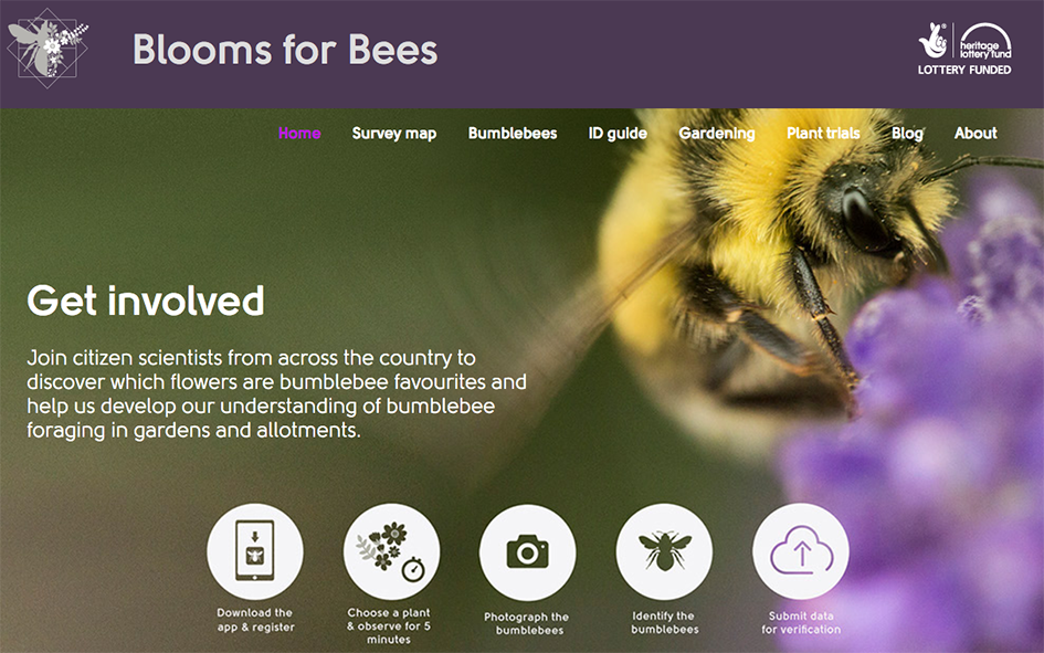 Blooms for Bees website homepage