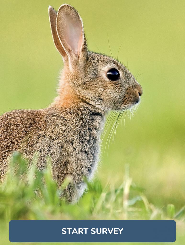 Mammal Mapper Home page