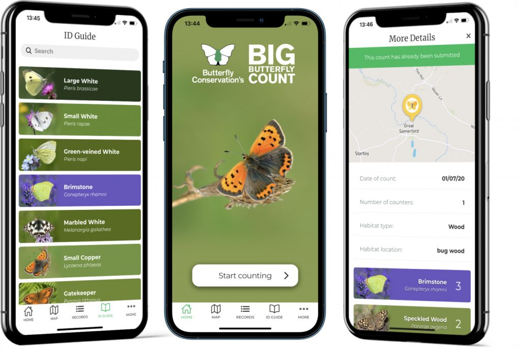 Big butterfly count app